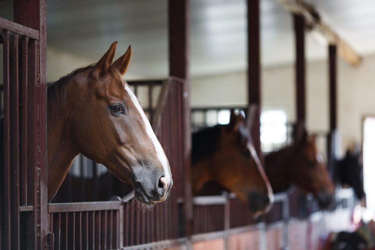 manage paardenverblijf