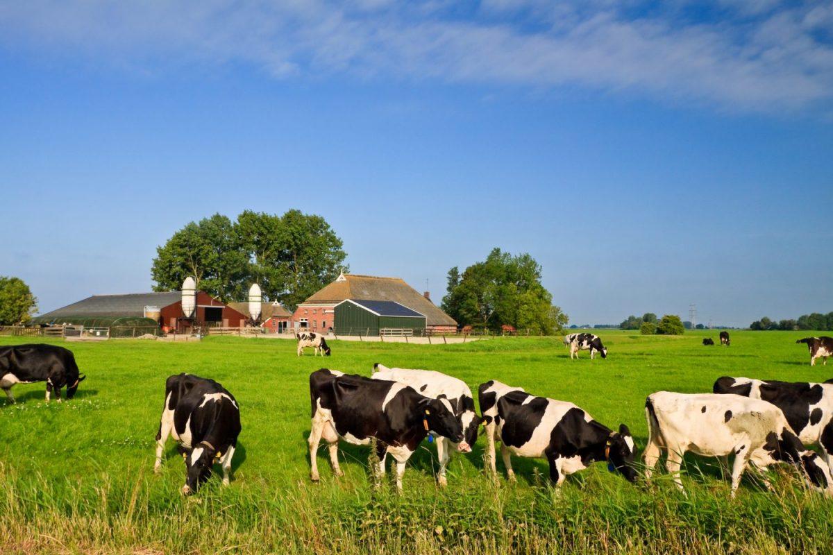 fosfaatrechten fosfaatreductie bedrijfstoeslag landbouw