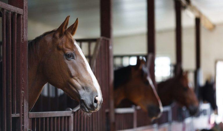 Planologische toelaatbaarheid paardenverblijf verschilt per gemeente