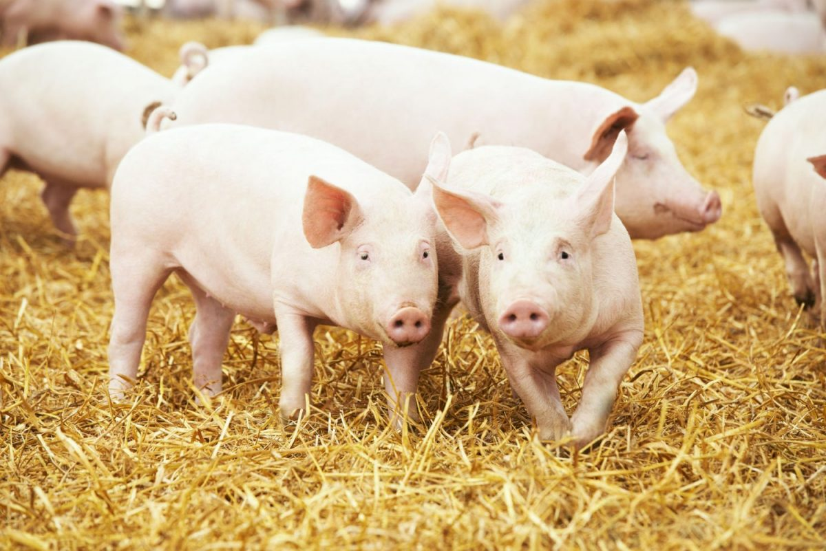 MER m.e.r. varkens geurbelasting