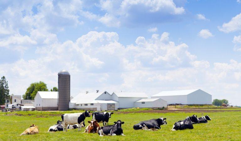 Regeling fosfaatreductieplan buiten werking gesteld voor aantal veehouders