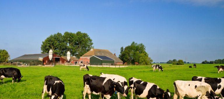 Meer duidelijkheid over fosfaatrechten pachter