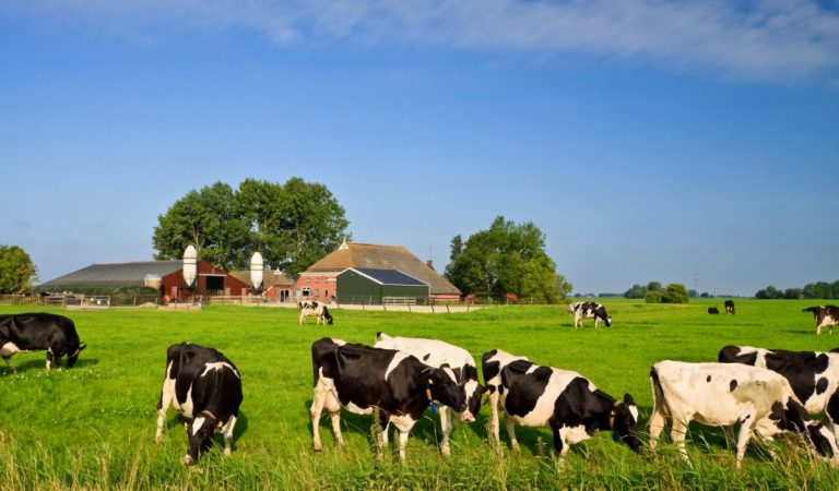 Kruiscontrole oppervlakte percelen bedrijfstoeslag en agrarische natuursubsidie