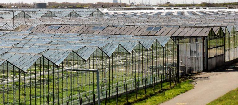 Lelieteelt is Natura 2000-project en vergunningplichtig