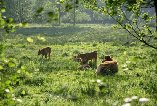 Uitspraak Europese hof houdbaarheid programmatische aanpak stikstof (PAS)