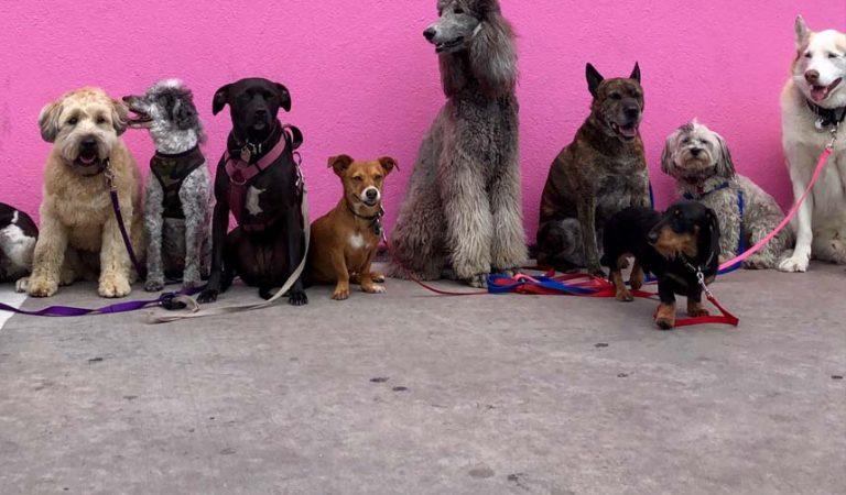 Hoeveel honden mag je in huis houden?